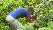 Retour à la nature: des citadins transforment leur jardin en vraie jungle sauvage