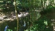 La Grande Honnelle: la colonne vertébrale de la réserve.