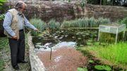 Le botaniste Alberto Gomez s'occupe, le 6 juillet 2020, de son jardin botanique à Quindio, où il est confiné depuis le mois de mars.