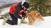 Saviez-vous qu'il existe des chiens pisteurs pour hérissons?