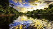 Le parc national de Manú: plongée au cœur de l'Amazonie