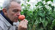 Trilogie de tomates et caviar d'aubergine à la flamme