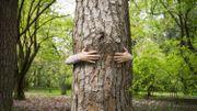 Câliner les arbres : le réflexe bien-être