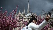 """Notre Dame de Paris : """"On n'avait pas besoin de ça"""", se désole le secteur du tourisme parisien"""