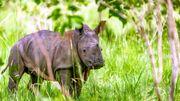 Les plus grands animaux terrestres sont-ils déjà condamnés ?