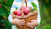 Luttez contre le gaspillage alimentaire avec FruitCollect