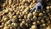 """La production de pommes de terre belges a """"plus que triplé en moins de 40 ans"""""""