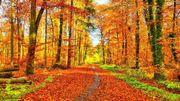 Réseau Idée: comment utiliser son temps libre en automne?
