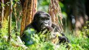 Le Rwanda s'ouvre au tourisme