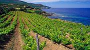 Goûtez les vins corse et visitez les hébergements insolites