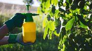 Le glyphosate, un herbicide controversé massivement utilisé