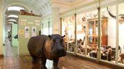 Le Musée des Sciences Naturelles de Tournai va être relooké