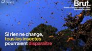 Tous les insectes pourraient disparaître d'ici 100 ans