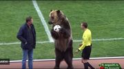 Scène surréaliste en D3 russe: Le ballon du match apporté par... un ours brun