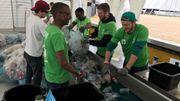 Dour festival: des PMC mieux triés par de jeunes bénévoles très courageux