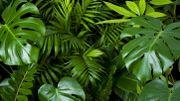 Certaines plantes modifient leur expression génétique pour ne pas empiéter sur l'espace des autres