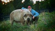Allez voir le documentaire The Biggest Little Farm en avant-première