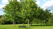 Quand les arbres parlent de Bruxelles!