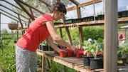 Comment confire les poivrons