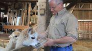 Il pense actuellement à se lancer dans la filière de la laine d'alpaga, une de ses nombreuses idées de diversification