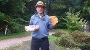 La fête des champignons fait peau neuve à la Maison du Parc à Botrange (5 et 6 octobre)