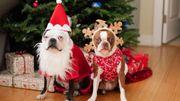 Le Noël de nos animaux de compagnie: ils font partie de la famille