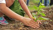 Un jardin écologique ?  C'est possible !