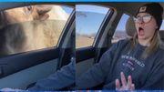 """Un bison """"futé"""" en pleine reproduction peut en cacher un autre"""