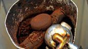 Comment faire pousser des champignons grâce au marc de café - Mode d'emploi