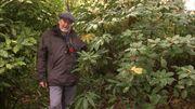 L'arbuste présenté par Luc : Fatsia Japonica