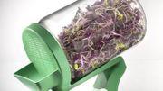 L'aliment insolite de Candice: les graines à germer