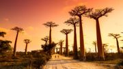 Direction Madagascar avec le visa électronique