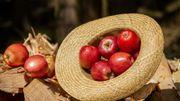 C'est l'un de nos fruits préférés et elle est excellente pour la santé parce qu'elle est peu calorique