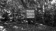 """""""La vie est une chose précieuse donnée par les parents"""", panneau de mise en garde à l'entrée de la forêt de Aokigahara, connue comme le """"bois des suicidés"""" depuis les années 1970 et rendu célèbre par des romans et séries télé populaires"""