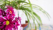 Comment donner du peps à ses plantes d'intérieur