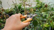 Que faire au jardin durant l'été ?