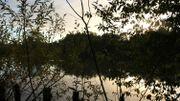 Le soir tombe doucement sur l'étang et sa faune