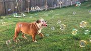 Ce chien ne supporte pas les poubelles mais internet l'adore !