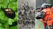 La disparition des insectes, la colonisation du Congo et la chasse dans la Semaine Viva