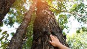 Les arbres remarquables, beautés et sagesses du monde