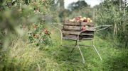 Le CRIE de Modave vous propose de venir cueillir des pommes mais aussi de les presser