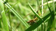L'apéro et Dégustation d'insectes à Liège
