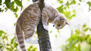 Ce chat est resté coincé 48heures dans un arbre à Waterloo. Les pompiers l'ont sauvé