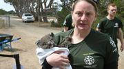 Australie: 32 espèces en danger critique d'extinction après les incendies