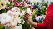 Quatre comptes Instagram à suivre pour les amateurs de plantes