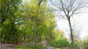 La balade de Carine : La Forêt Domaniale de Silly