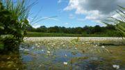 Sur le RAVeL de Fosse-la-Ville, le Lac de Bambois, une des 27 zones de baignade en Wallonie!