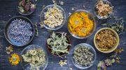 Romarin, menthe poivrée, lavande: on mise sur les plantes pour rester zen à la rentrée