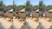 Vidéo impressionnante : Hailey Morinico, 17 ans, repousse un ours à mains nues pour sauver ses chiens