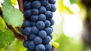 """Du parfum dans le marc de raisin: un ingénieur trouve le chemin des """"arômes cachés"""""""